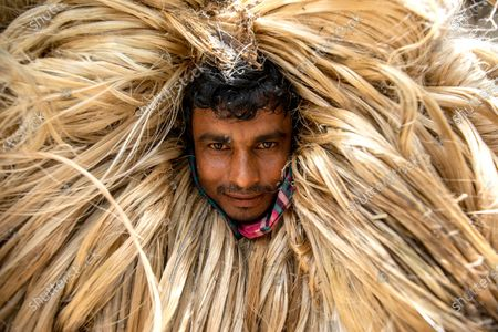 Stock Image of Workers appear to be wearing large golden wigs as they carry a heavy bundle of jute fibre. Their bodies are enveloped with the heavy natural fibres, with only their faces visible as they each carry around 50kg of jute on their shoulders.  The unusual images were captured by photographer Azim Khan Ronnie in Manikganj, Bangladesh.
