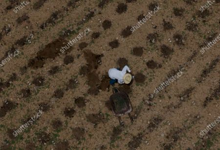 """Stock Picture of Jorge Vazquez removes shrubs in a field before planting corn in San Jeronimo Xayacatlan, Mexico, . Vázquez was working in a New York restaurant on Sept. 11, 2001, and after the attack on the Twin Towers business dropped off and he was fired. He remembers the fear of another attack, so similar to the fear of contagion. """"History's repeating itself in some way,'' he says"""