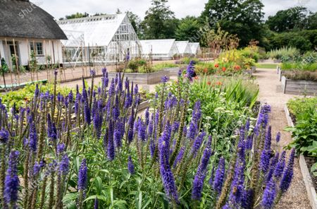 A view of the Royal Kitchen Garden at Graasten Castle in Southern Jutland, Denmark, 24 July 2020, that was inaugurated by the Danish monarch. The Royal Kitchen Garden will be a new, regional tourist attraction in Southern Jutland, which will also be a local gathering place for teaching and activities that connect for sustainable cultivation of herbs, vegetables, berries and fruit.