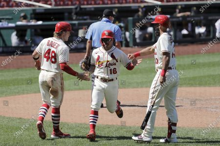 Stock Image of St. Louis Cardinals' Harrison Bader (48) and Kolten Wong (16) are congratulated by teammate Matt Carpenter, right, after scoring on a two-run single by Paul DeJong during the seventh inning of a baseball game against the Pittsburgh Pirates, in St. Louis