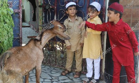 Children playing with a goat on the occasion of Eid al-Adha, on August 1, 2020 in Patiala, India. The holy festival of sacrifice, which falls on the 10th day of Dhu al-Hijjah as per the Islamic lunar calendar, is being celebrated today. Bakra Eid or Bakrid is marked by sacrificing an animal that is close to them to prove their devotion and love for Allah. Post the sacrifice, devotees distribute the offering to family, friends, neighbours and especially to the poor and the needy.
