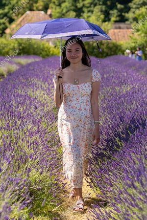 Nikki Hilario enjoys day trip to Mayfield Lavender Farm.