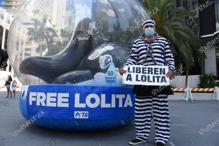 "Activist - Alejandro Dintino. 50 Years to the Day: 'Orca' in a fishbowl shames Anniversary of Lolita's Capture. PETA Supporters - including model and online influencer Natasha Araos and actor and Miss Universe 1996 Alicia Machado, and accompanied by a giant inflatable orca trapped in a fishbowl and holding ""Free Lolita!"" signs."