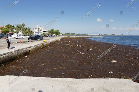 Sludge and debris from the floods on the island of Euboea, have washed ashore in the area of Oropos port