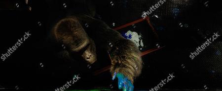 Stock Image of Ivan (Sam Rockwell)
