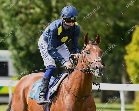 Stock Picture of Knight Salute ridden by David Probert goes down to the start of The Irish Stallion Farms EBF Stonehenge Stakes during Horse Racing at Salisbury Racecourse on 21st August 2020