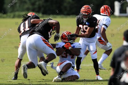 Stock Image of Cincinnati Bengals' Trayvon Henderson, left, Marcel Spears Jr., middle left, collide as Samaje Perine, middle, is hit by Greg Mabin, right, during an NFL football camp practice in Cincinnati