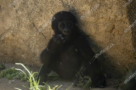 Editorial image of Los Angeles Zoo reopens, USA - 26 Aug 2020