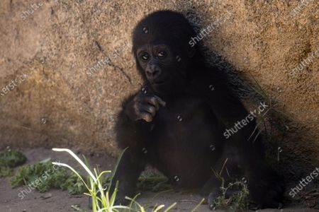 Editorial picture of Los Angeles Zoo reopens, USA - 26 Aug 2020