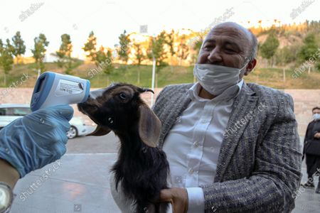 A man seen check temperature a goat in Ankara, as Turkey has reported 1,502 new confirmed cases of the new coronavirus (COVID-19) the highest daily jump in more than a month.