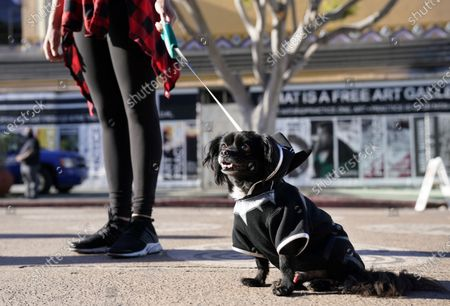 """Breana Goodrum stands with her dog """"T'Challah,"""" named and dressed after the late actor Chadwick Boseman's character in the 2018 film """"Black Panther,"""" outside a news conference to celebrate his life, Saturday, Aug. 29. 2020, in Los Angeles. Boseman died Friday at 43 after a four-year fight with colon cancer"""