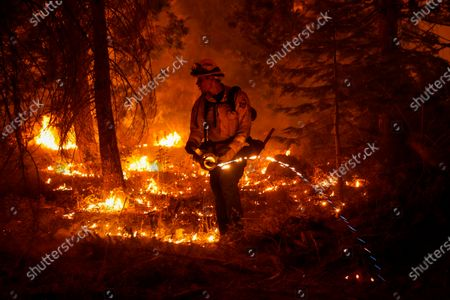 Stock Image of Firefighter Ricardo Gomez, of a Cal Fire engine from Bradley, takes part in conducting a back burn operation along CA-168 during the Creek Fire as it approaches the Shaver Lake Marina on Sunday, Sept. 6, 2020 in Shaver Lake, CA. (Kent Nishimura / Los Angeles Times)