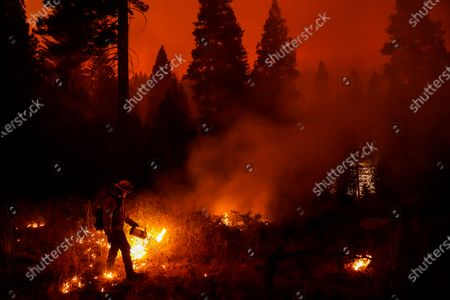 Firefighter Ricardo Gomez, of a Cal Fire engine from Bradley, takes part in conducting a back burn operation along CA-168 during the Creek Fire as it approaches the Shaver Lake Marina on Sunday, Sept. 6, 2020 in Shaver Lake, CA. (Kent Nishimura / Los Angeles Times)