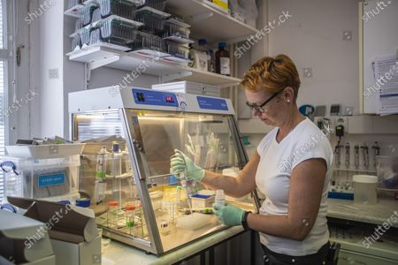 Stock Photo of A scientist Lenka Piherova at work in laboratory at General University hospital in Prague, Czech Republic, 07 September 2020 (issued 09 September 2020). Charles University on 09 September presented viRNAtrap kits for a parallel detection of coronavirus SARS-CoV-2 which causes the Covid-19 disease, and Influenza A and B, created by prof. Stanislav Kmoch from 1st Faculty of Medicine of the Charles University. According to scientists, kits will speed up the testing process and increase the current capacity of laboratories. University and their subsidiary company plans to have these kits available in October 2020.