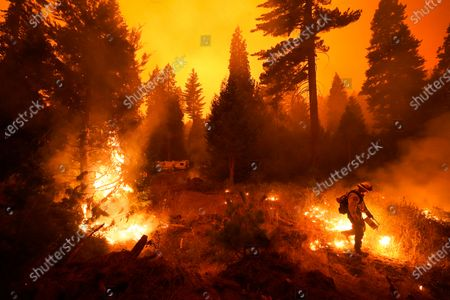Firefighter Ricardo Gomez, of a San Benito Monterey Cal Fire crew, sets a controlled burn with a drip torch while fighting the Creek Fire in Shaver Lake, Calif. Two unusual weather phenomena combined to create some of the most destructive wildfires the West Coast states have seen in modern times