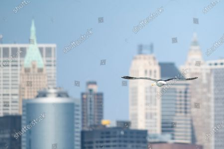 An overall view of The NYC skyline with a seagull flying past in Manhattan, New York. Mandatory credit: Kostas Lymperopoulos/CSM