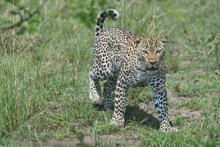 Redactionele foto van Uganda Kasese Covid 19 National Parks Reopen - 18 Sep 2020