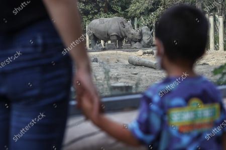 People watch rhinos at Beijing zoo in Beijing, China, 22 September 2020. China's leading animal protection organizations on 22 September sent an open letter to President Xi Jingping urging the Chinese government to make China the first country in Asia to ban the import of rhino hunting trophies as the World marks the Rhino Day.