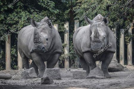 Editorial photo of Beijing World Rhino Day, China - 22 Sep 2020