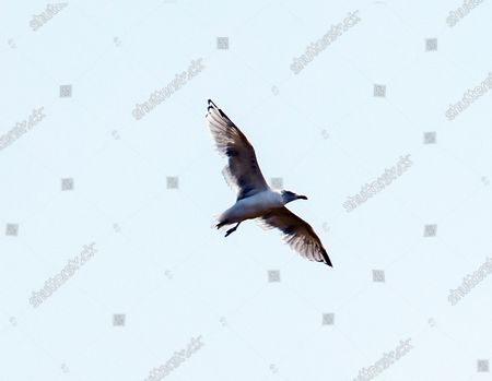 Stock Photo of Stephen The Seagull