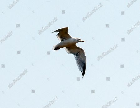 Stock Picture of Stephen The Seagull
