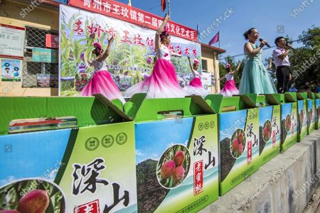 On September 19, 2020, more than a thousand mu of traditional peaches were launched in Hebei Ya and Yangjiawu villages of Wangfan Town, Qingzhou City, Shandong Province. Peach Culture and Art Festival was held there, which not only celebrated the harvest, but also allowed tourists to enjoy the beautiful scenery of harvest and experience the fun of picking, so as to promote product sales and help rural revitalization.