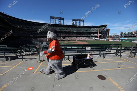 Lou Seal, the San Francisco Giants mascot, walks in the outfield stands during the fifth inning of a baseball game against the Colorado Rockies in San Francisco