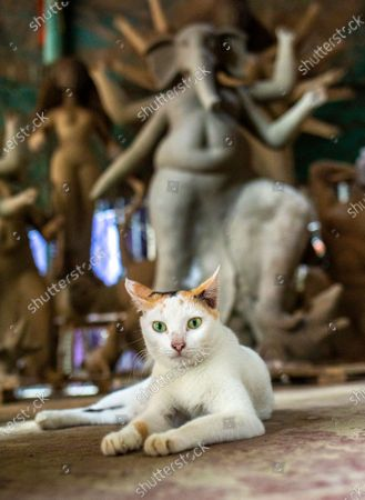 A cat sit in front of Ganesha God idol as artist works on an idol of the Goddess Durga ahead of the largest Durga Puja festival of the Bengali Hindus community in Dhaka, Bangladesh, 26 September 2020. The Durga puja will run from 22 to 26 October. According to Hindu faith, goddess Durga comes down to the earth from the heaven to establish peace, harmony by annihilating evil forces.