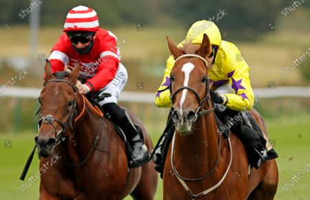 PERCY'S LAD (right, Charles Bishop) wins The Call Star Sports Derby Wild Card Conditions Stakes Nottingham