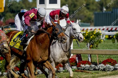 Stock Photo of , 2020, Baltimore, MD, USA: Laki #4, ridden by jockey Horacio Karamanios, wins the Frank J. DeFrancis Memorial Dash during Preakness Stakes Day at Pimlico Race Course in Baltimore, Maryland. Scott Serio/Eclipse Sportswire/CSM