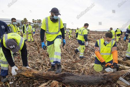 Decoupe des tronc a la tronconneuse. Tempete Alex, Operations d'evacuation des dechets de bois accumules par la crue du Var (plusieus tonnes de bois et de troncs d'arbres) 100 agents de la ville et 200 benevoles, mais ainsi des particulier qui recupere de bois pour un usage personnelle, Saint-Laurent du Var FRANCE - 07/10/2020