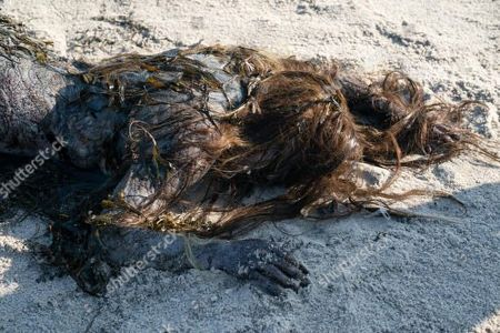 Adria Arjona as Dana/Mermaid
