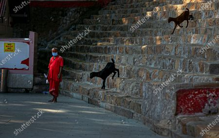 Goats offered by devotees walk down a flight of stairs as a priest stands wearing face mask at the Kamakhya Hindu temple in Gauhati, India, . After being shut for more than six months due to the coronavirus pandemic, Assam's famous Kamakhya Temple is opened its gates to devotees from September 24 2020