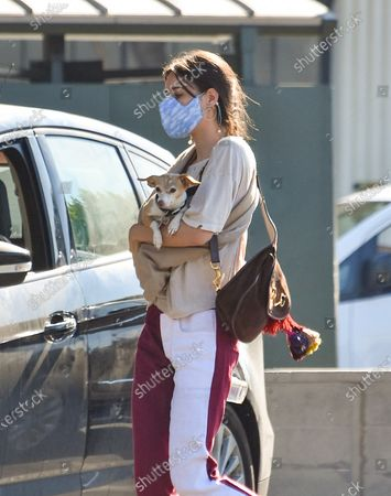 Stock Picture of Scout LaRue Willis is seen out grabbing coffee with her dog wrapped tightly in her arms