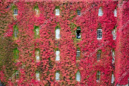 Emily Murdoch (right) a third year English student and her room mate Jo Matthews, a third year medical student in their room at St John's College, Cambridge, surrounded by Boston Ivy.