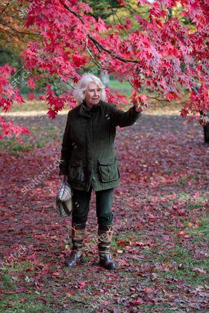 The Duchess of Cornwall visits The National Arboretum, Westonbirt, UK - 26 Oct 2020: редакционная картинка