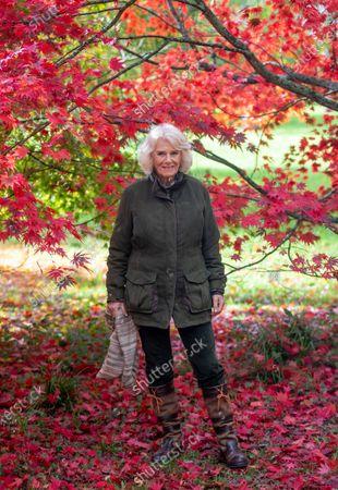 The Duchess of Cornwall visits The National Arboretum, Westonbirt, UK - 26 Oct 2020: редакционное изображение