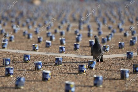 A dove seen next to 25,000 memorial candles for the 25th anniversary of the assassination of the late Israeli PM, Yitzhak Rabin in Rabin Square, Tel Aviv,  Israel, 29 October 2020. Rabin received the Nobel Prize for Peace in 1994 along with his Foreign Minister Shimon Peres and Palestine Liberation Organization leader Yasser Arafat, for their efforts towards peace. He was the fifth Prime Minister of Israel, serving two terms in office, 1974-77, and 1992 until his assassination in 1995. Rabin was fatally shot after attending a peace rally held in Tel Aviv's Kings Square by a far-right Jewish law student, on 04 November 1995.