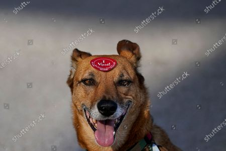 Rick Davis' dog Wiley wears an I Voted sticker placed on his head after Davis dropped off his ballot at a San Francisco Department of Elections drop-off location at the Chase Center in San Francisco, ahead of Election Day