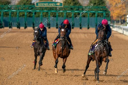Stock Picture of Aidan O'Brien trainees at Keeneland Race Course in preparation from their races at the Breeders'Cup, Lexington, KY