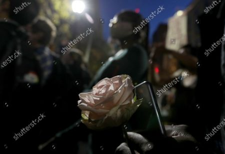 PHILADELPHIA, PA.- NOV. 5, 2020. An anti-Trump protester holds a rose and joins a gathering outside the Philadelphia Convention Center, where counting of ballots for the 2020 presidential election continued on Thursday, Nov. 5, 2020. (Luis Sinco / Los Angeles Times)