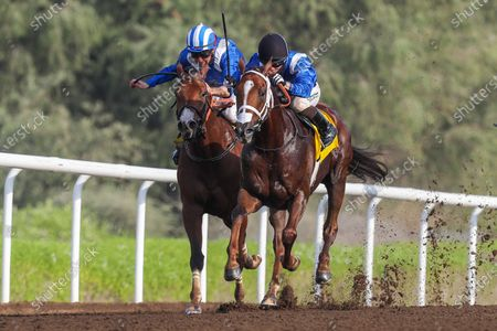 Stock Picture of GABR (GB) ridden by Sam Hitchcott wins the 8F Conditions Shadwell Handicap, race 4, at Jebel Ali, Dubai, UAE