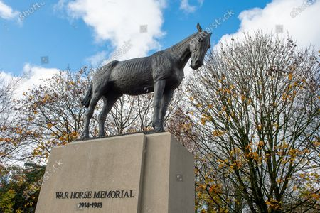 A meadow of painted purple poppies by artist Jenna Fox have been left by the bronze scuplture of the War Horse Memorial in Ascot to mark Remembrance Sunday and Armistice Day 2020. Millions of horses, mules and donkey perished in the Great War. The bronze horse scuplture by Susan Leyland named Poppy, has a tear trickling from the horse's eye. People across the country will fall silent for two minutes at 11.00am on 11th November 2020 as they pay their respects to the war dead of World War I, World War II and more recent conflicts across the world