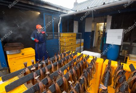 A proprietor of Arbroath Fisheries Ltd. Campbell Scott, looks on a smoking haddock at his smokery in Arbroath, Scotland, Britain, 11 November 2020. A Smokie is a hot smoked haddock cooked in a barrel over an open flame. The company use Scottish haddock sourced from the cold waters of the North Sea and still produce it using traditional methods. Having attained PGI Status in 2004 Arbroath Smokies can only be produced within a five mile radius of the town center and enjoy the same status as Parma Ham and Champagne. The methods are strictly monitored to ensure customers are receiving the genuine article.