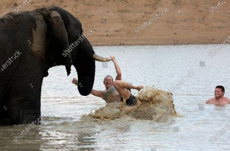 """Tourist gets tossed in the water while on a visit to """"Adventures With Elephants"""" near Bela Bela, South Africa, where visitors can get to know elephants and bathe them. In an effort to revive its tourism industry, South Africa has opened up international travel to visitors from all countries, President Cyril Ramaphosa has announced. South Africa will now admit foreign visitors providing they produce negative COVID-19 test results, Ramaphosa said in a broadcast address Wednesday, Nov. 11, 2020"""