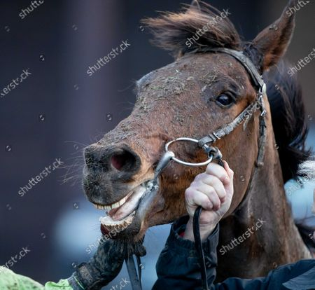 Exciting Oscar after winning The Barry Geraghty`s Autobiography `True Colours` Handicap Hurdle