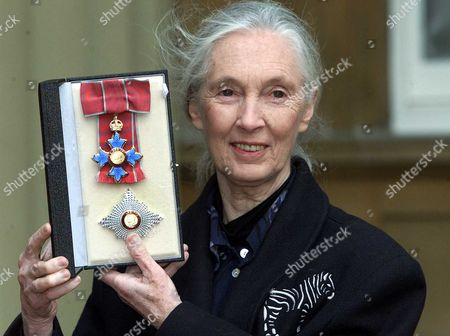 Investitures At Buckingham Palace Dame Jane Goodall - Leading Expert On Chimpanzees.