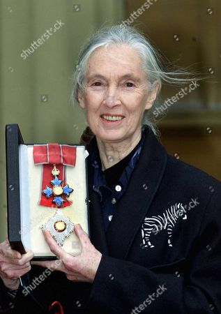 Investitures At Buckingham Palace: Dame Jane Goodall - Leading Expert On Chimpanzees.