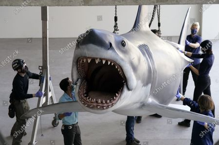 """Fiberglass replica of Bruce, the shark featured in Steven Spielberg's classic 1975 film """"Jaws,"""" is lifted into a suspended position for display at the new Academy of Museum of Motion Pictures, in Los Angeles. The museum celebrating the art and science of movies is scheduled to open on April 30, 2021"""