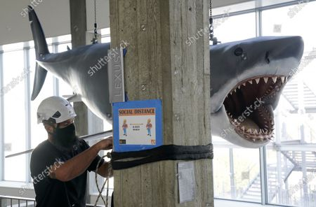 """Stock Photo of Fiberglass replica of Bruce, the shark featured in Steven Spielberg's classic 1975 film """"Jaws,"""" looms over worker Will Wilson of LA Pro Point after it was raised into a suspended position for display at the new Academy of Museum of Motion Pictures, in Los Angeles. The museum celebrating the art and science of movies is scheduled to open on April 30, 2021"""